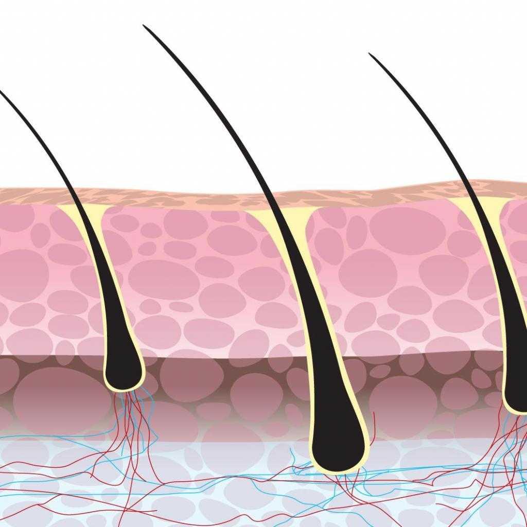 форма кутикулы волосы