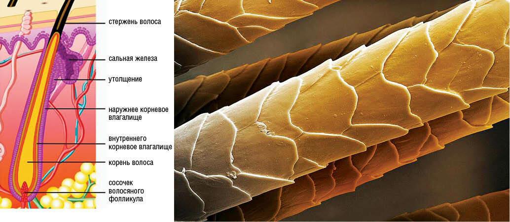 нарушении структуры волос