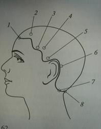 Волосяной покров головы человека