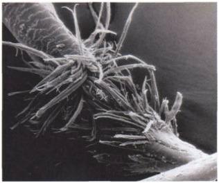 При высокотемпературной укладке содержащаяся в волосе вода может резко вскипать