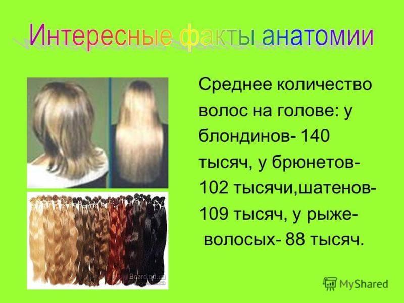 Сколько волос на голове человека