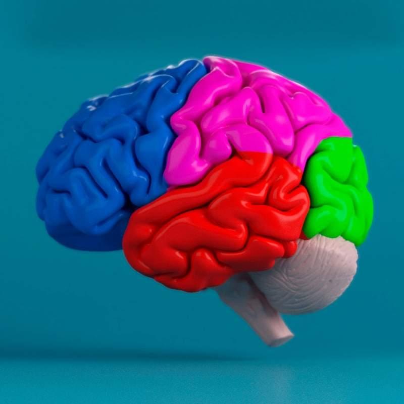 трехмерного изображения мозга
