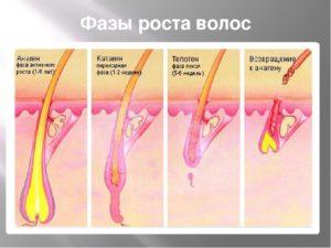 фазу роста волос