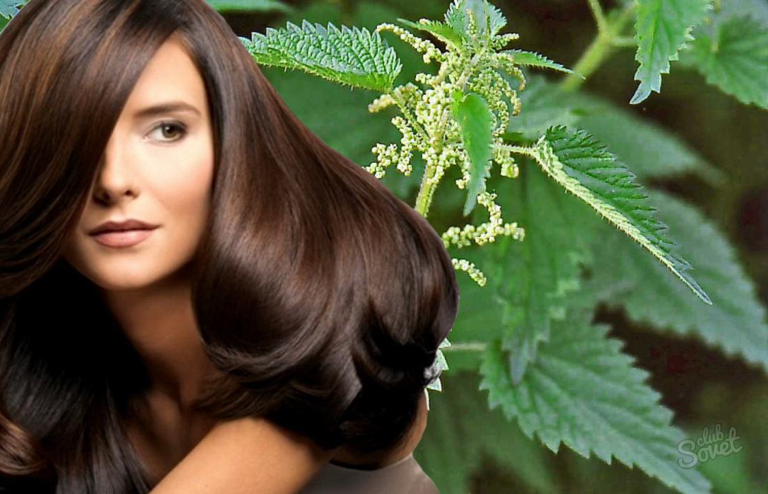 Крапива против выпадения волос