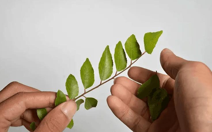 Листья карри для волос отзывы