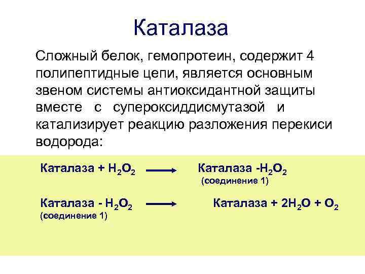 фермент каталазу