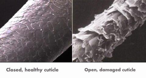 поврежденный волос изнутри