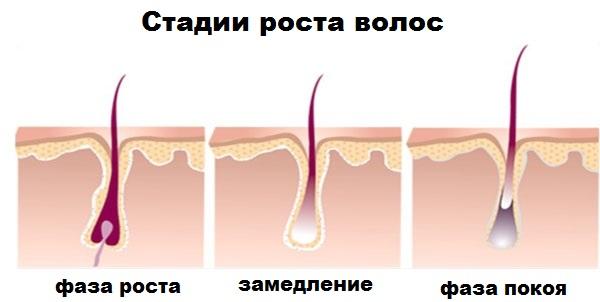 Скорость роста волос на теле